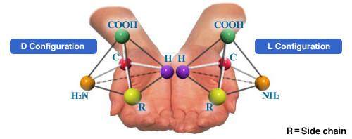 D & L Amino Acids Configuration