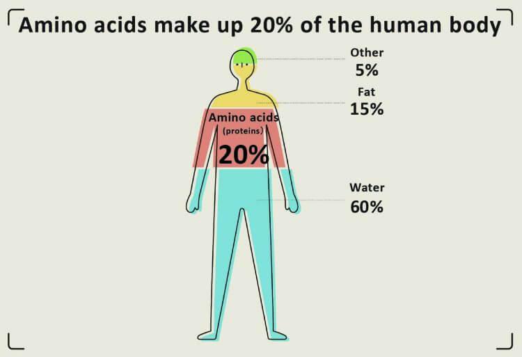 20 pour cent d'acides aminés