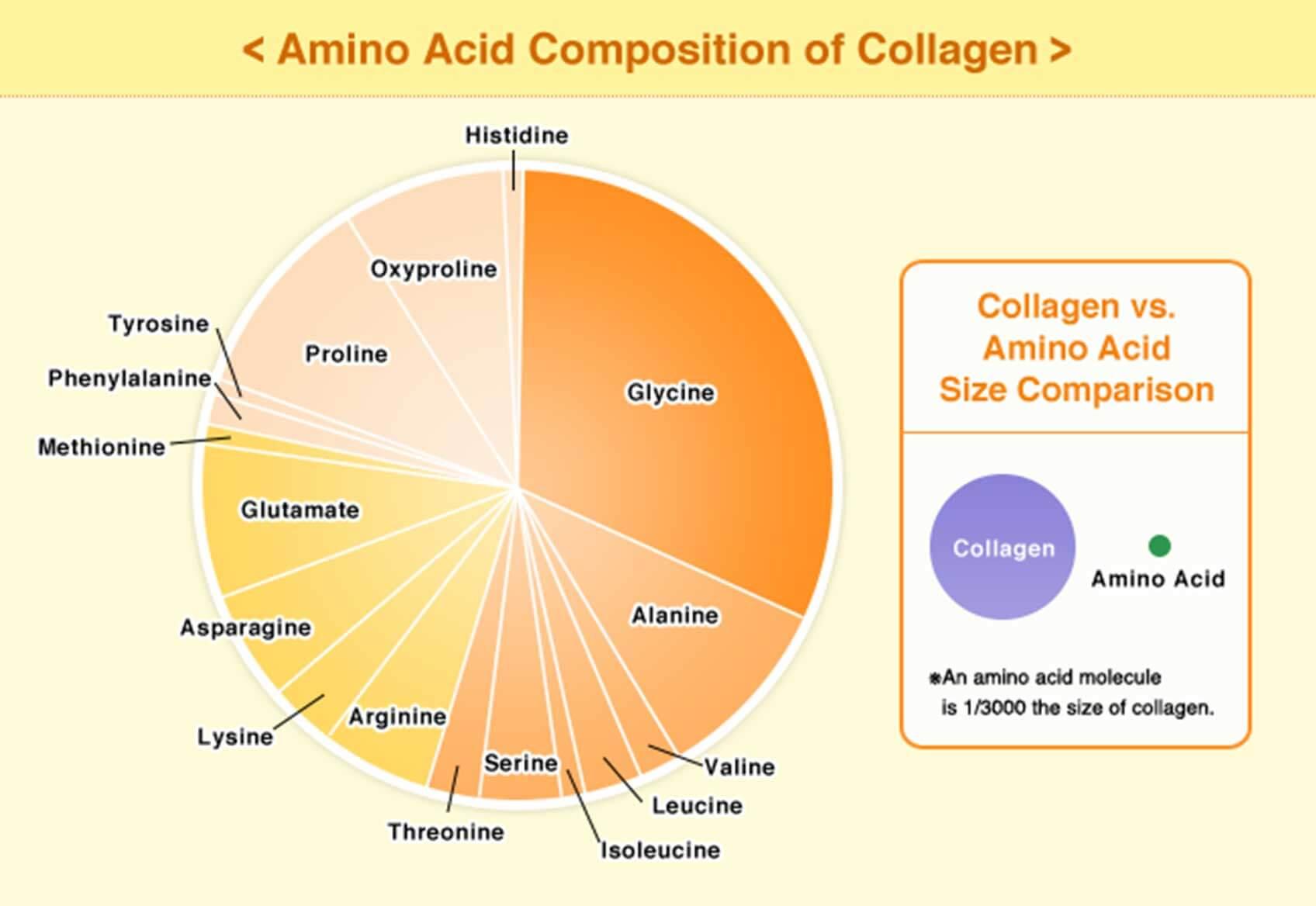 Composition d'acides aminés de collagène