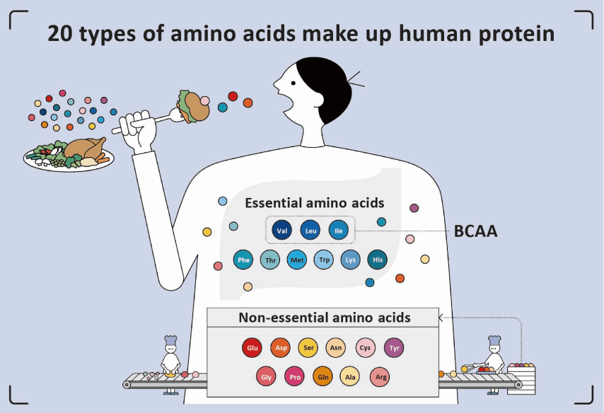 20 Types Of Amino Acids