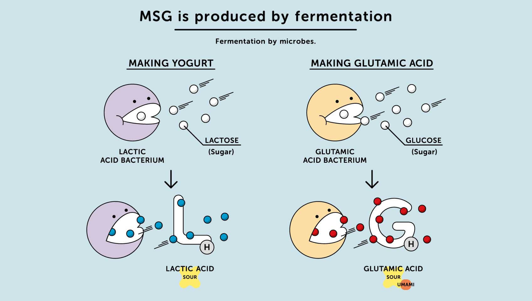 How Is Msg Made