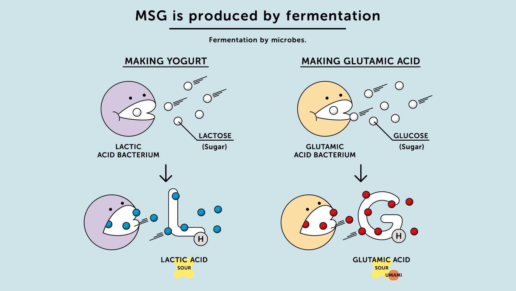 Comment est fabriqué Msg