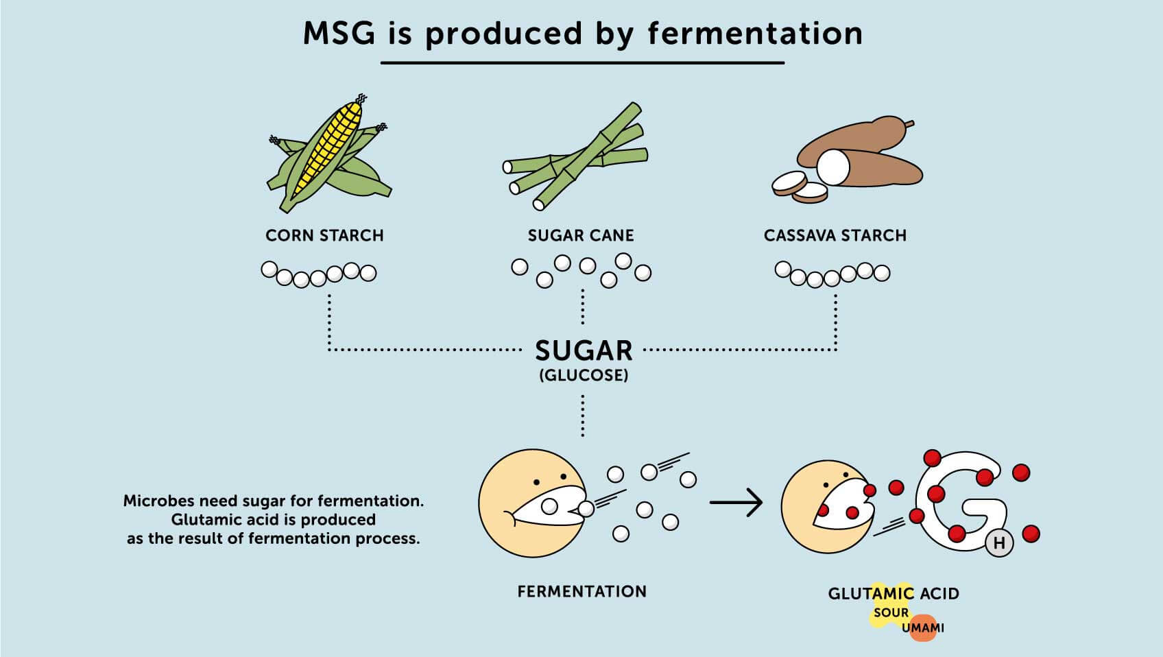 MSG Fermentation By Corn And Cassava Starch