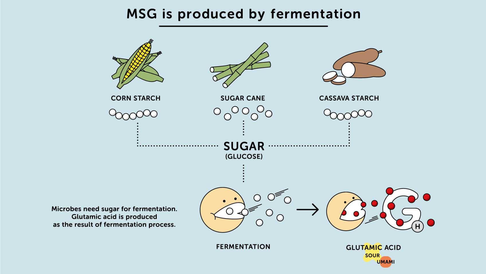 التخمير MSG بواسطة الذرة ونشا الكسافا