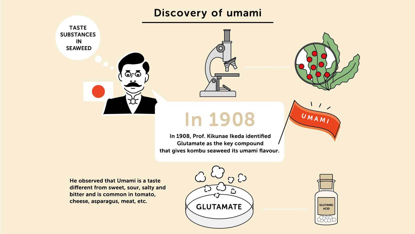Umami Discovery คืออะไร